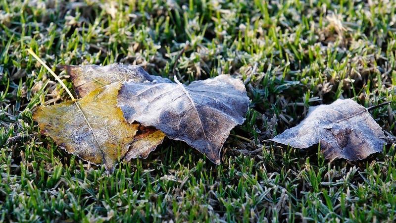 Hasta -2°C: Extienden alerta por heladas para seis regiones del país