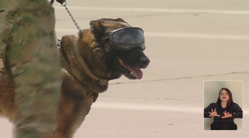 ¡Abran paso! Los perros de rescate desfilan con gafas y zapatos en la Parada Militar