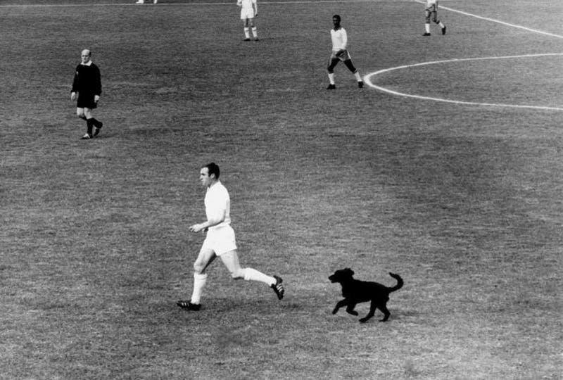 Muere Jimmy Greaves: El día en que un perro de Viña del Mar orinó a la leyenda del fútbol inglés