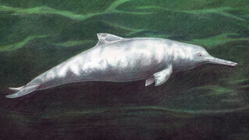 Descubren nueva especie de delfín que vivió hace 7 millones de años