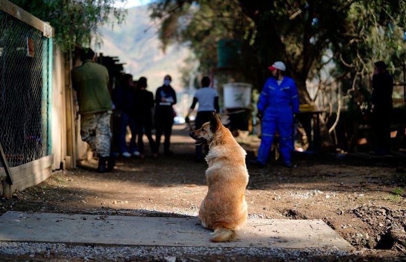Prohibición perpetua para tenencia de animales: condenan a hombre por maltrato de 70 perros y 3 gatos