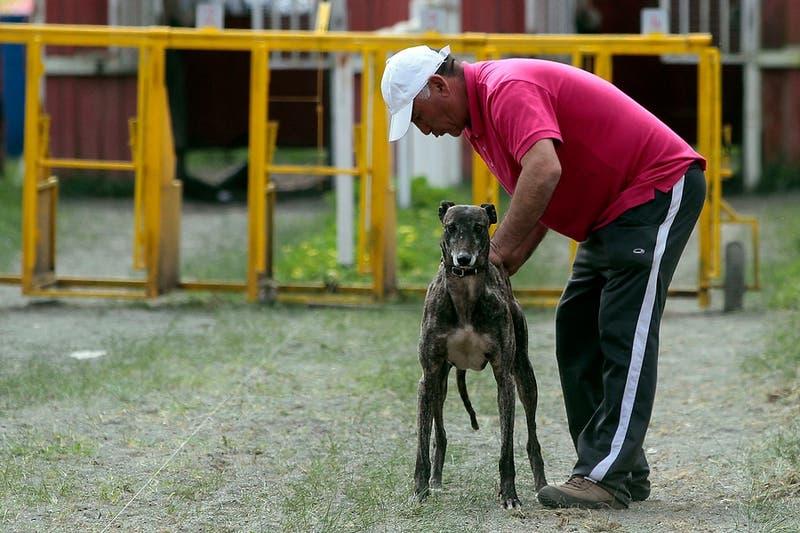 Cámara de Diputados rechaza prohibir carreras de perros