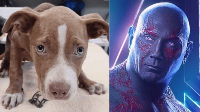 Estrella de Marvel adopta a perrita maltratada y ofrece recompensa a quien sepa del culpable