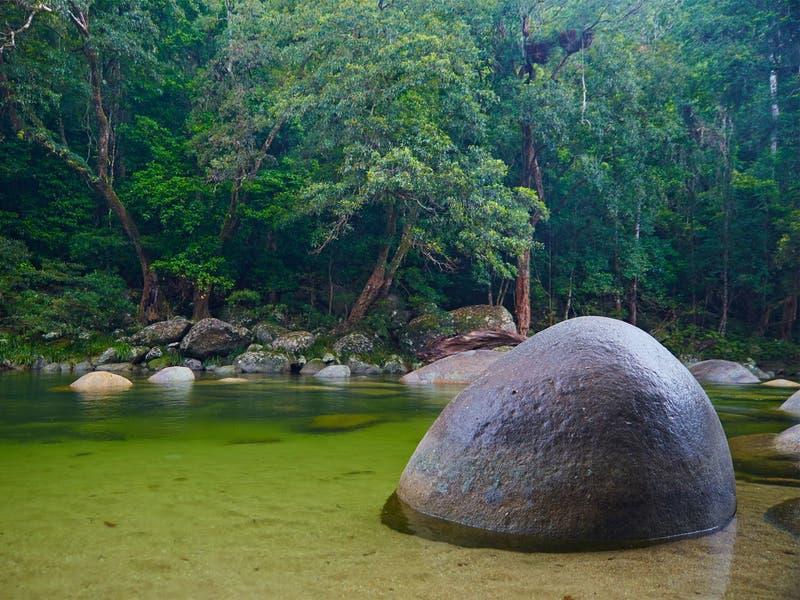 Indígenas recuperan propiedad de bosque lluvioso Daintree en Australia