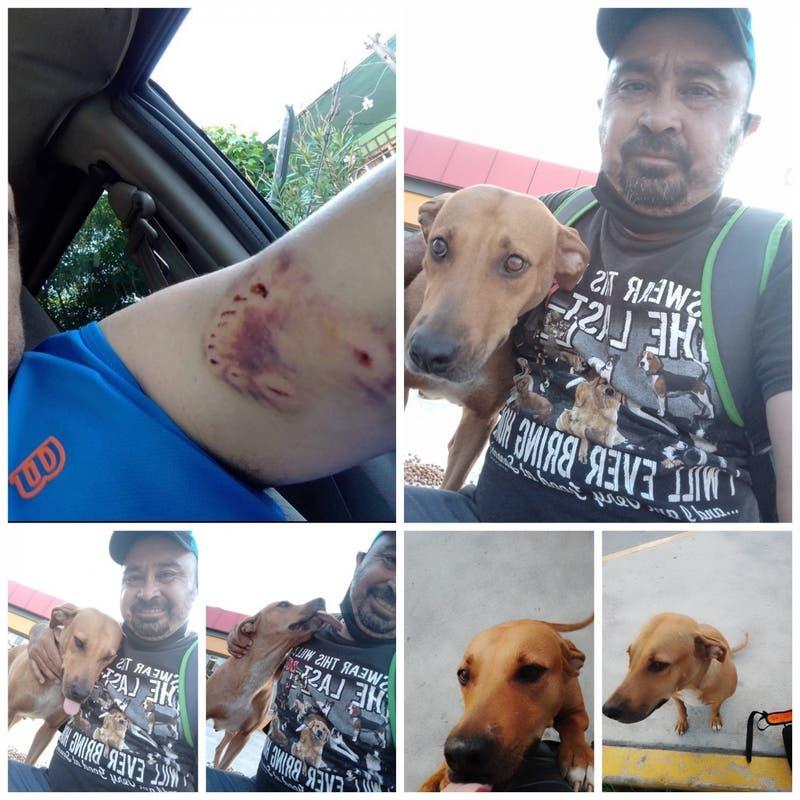 Hombre perdonó a perrita que lo atacó y ahora son inseparables