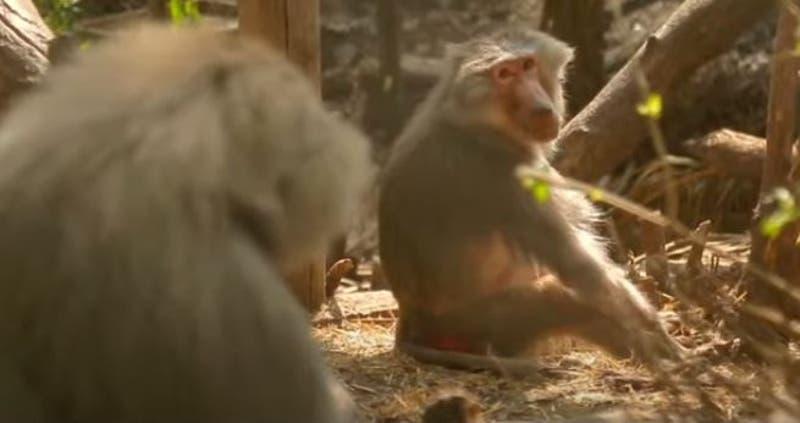 [VIDEO] Reportajes T13: Millonaria venta de animales por parte del ISP