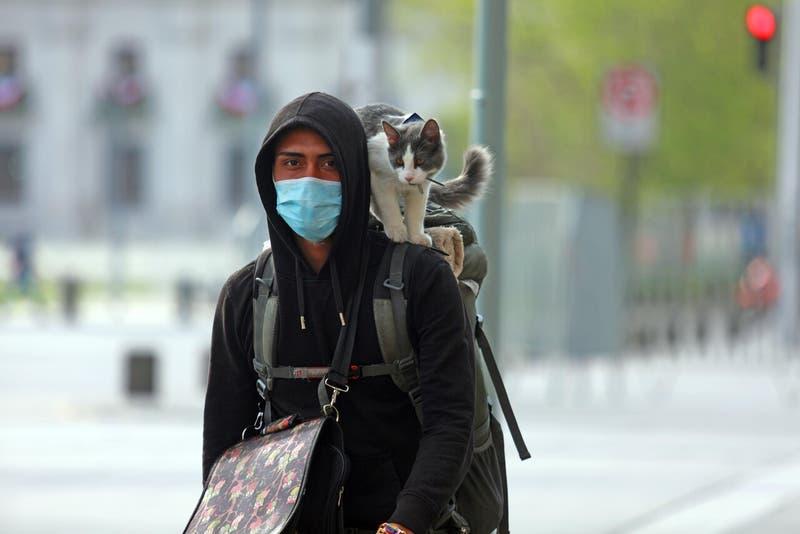 Diputado propone seguro para mascotas asociado a cotizaciones de Fonasa