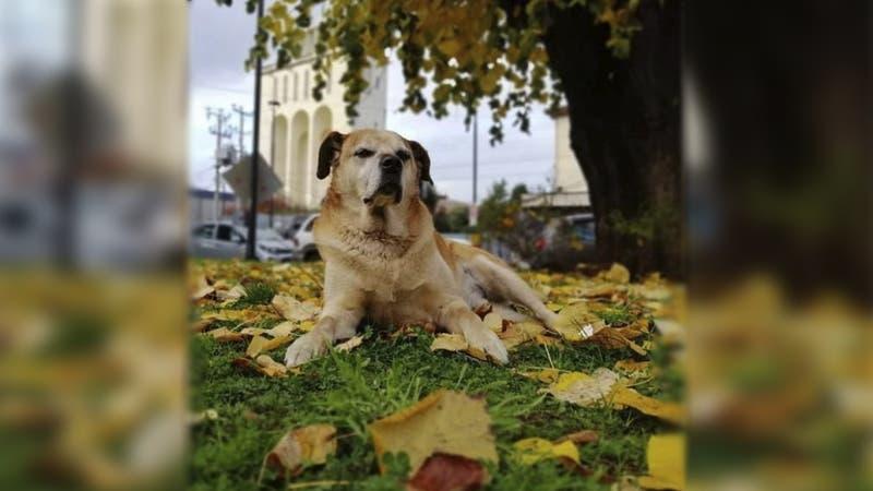 """Osorno: Inauguran veterinaria pública en honor a perrito callejero """"Don Luis Apolo"""""""