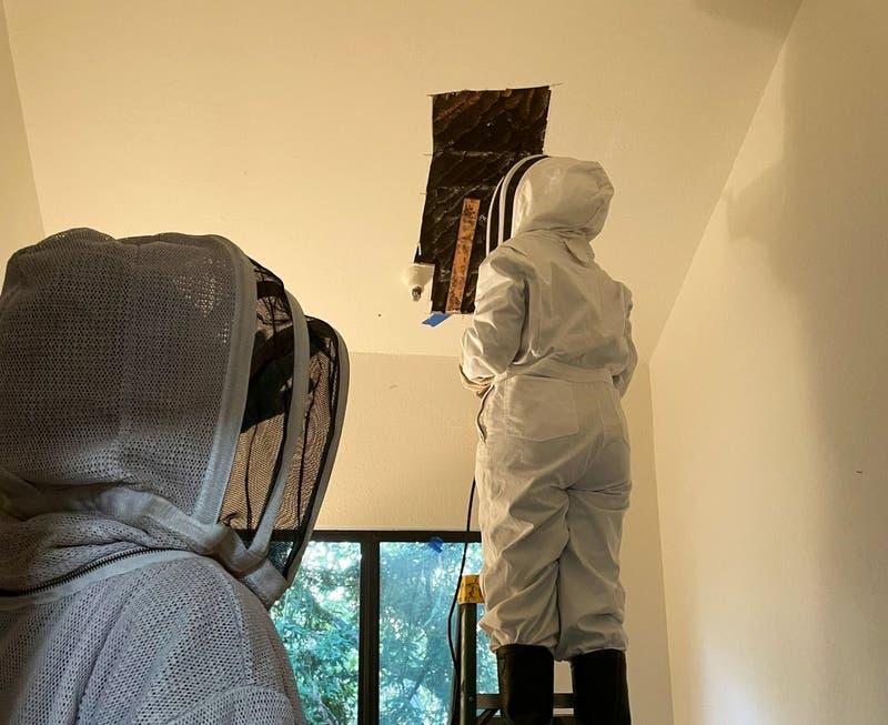 Hombre encontró colmena gigante de abejas en su techo: se había mudado hace un mes
