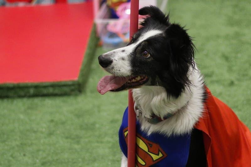 Proyecto busca regular tuición de mascotas tras separación de sus dueños