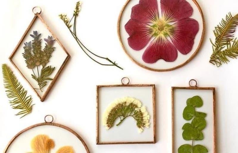 Brisa Estudio: Emprendedora busca entregar energía positiva con sus cuadros botánicos