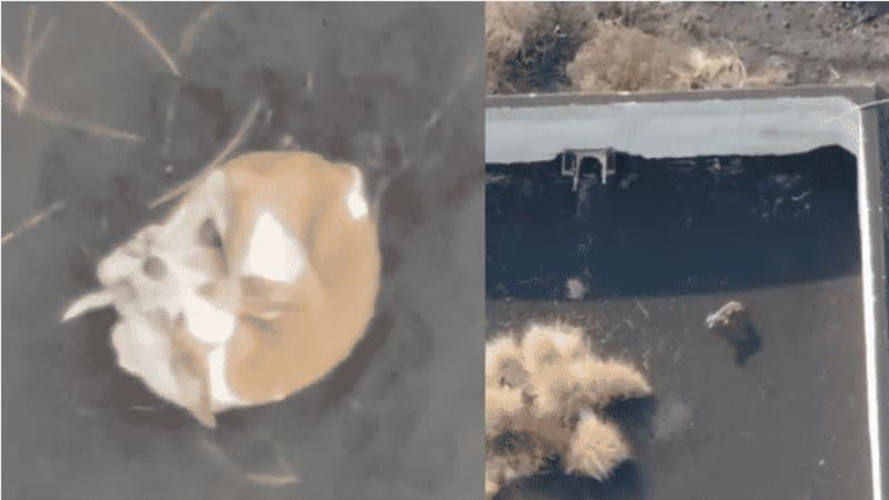 Drones intentarán rescatar a los perros atrapados entre la lava del volcán en España