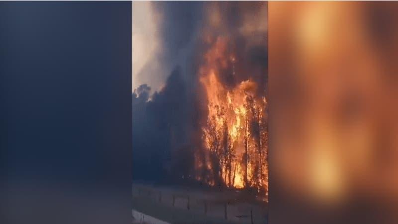 Reportan incendio de gran escala en Panquehue: Ya ha consumido cinco hectáreas