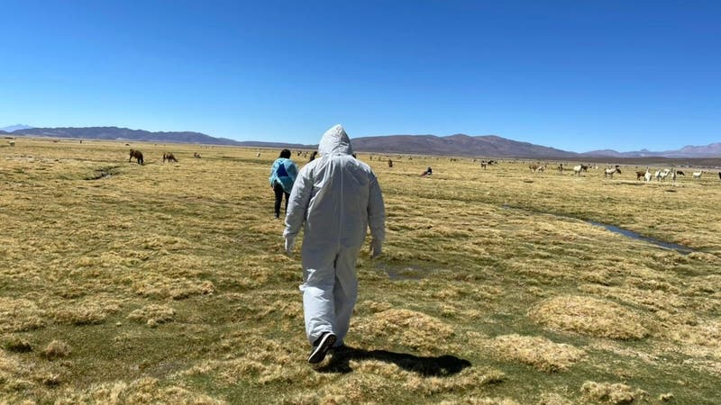 Mujer migrante muere en cercanías de la frontera de Chile con Bolivia