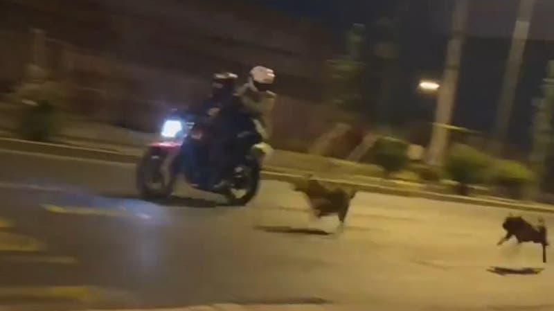 [VIDEO] 18-O: Revelan momento del accidente de moto con cable acerado en La Granja