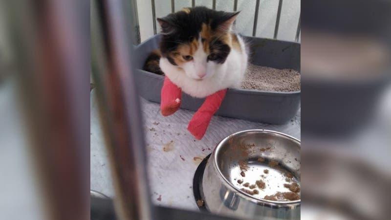 Denuncian maltrato animal contra gata en Viña del Mar: Veterinario descarta acusaciones