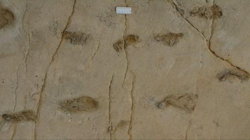 Huellas de Trachilos: la evidencia fósil que desafía los orígenes de la humanidad